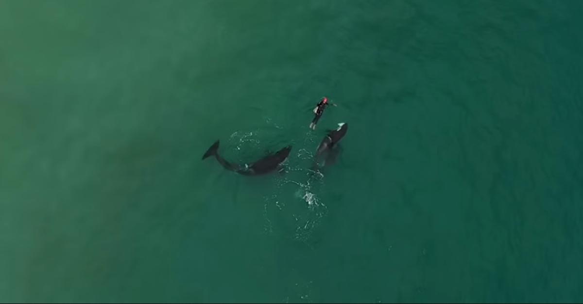 orque rencontre homme