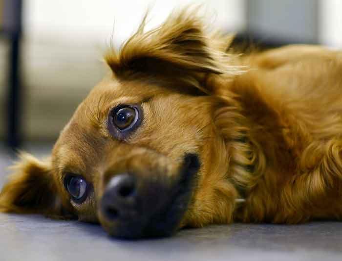 Mon chien me donne souvent la patte : 4 raisons qui expliquent pourquoi