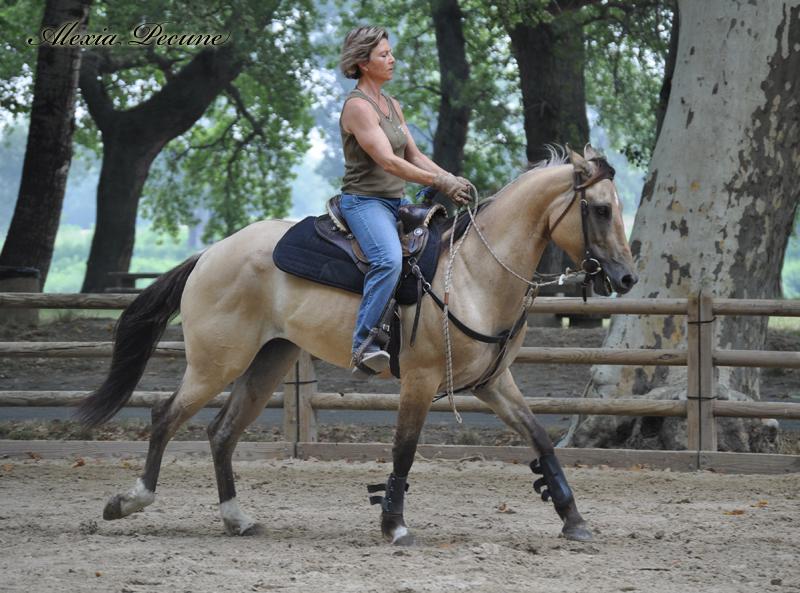 Rencontres amicales equitation, Προτεινόμενα θέματα