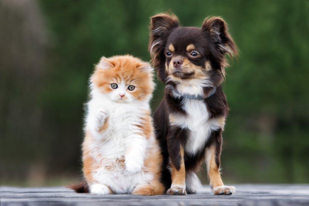 site rencontre amis animaux