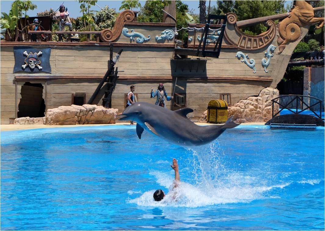 rencontre avec les dauphins marineland durée