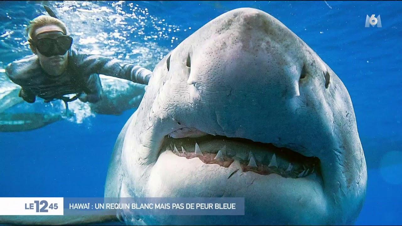 [VIDÉO] Des plongeurs téméraires nagent avec un immense requin blanc sans cage | JDQ