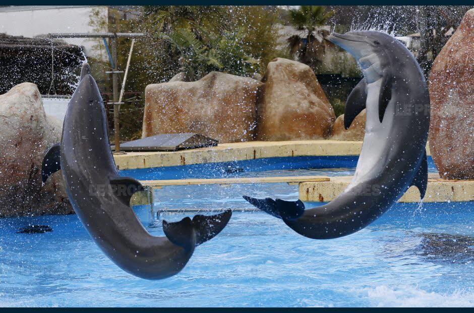 rencontre avec les dauphins marineland durée lili2.be rencontre